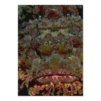 Face of a Galapagos scorpion fish 5x7 Paper Invitation Card