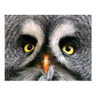 Face of a Great Grey Owl Postcard