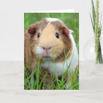 Face of a Guinea Pig Photo Card