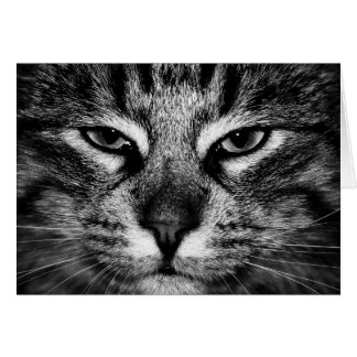 Face of a Norwegian Forest Cat Card