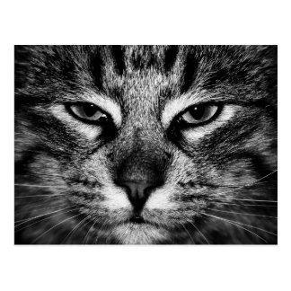 Face of a Norwegian Forest Cat Postcard