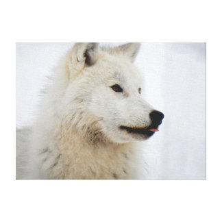 Face of an arctic wolf sticking his tongue out canvas print