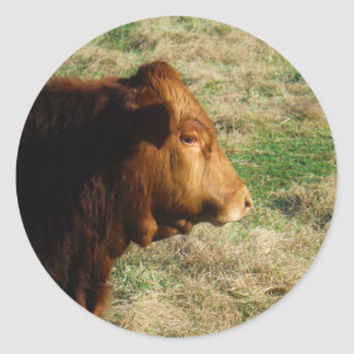 Face of Brown bull cow Classic Round Sticker