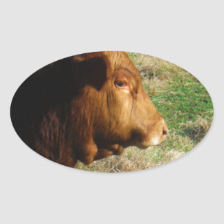 Face of Brown bull cow Stickers