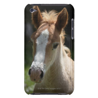 face of foal iPod touch cover