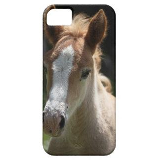 face of foal iPhone 5 case