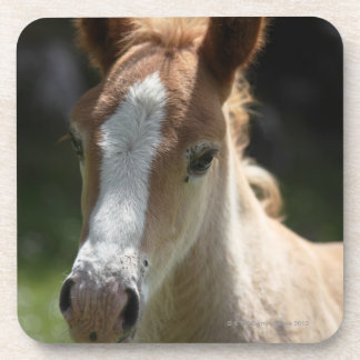 face of foal drink coaster