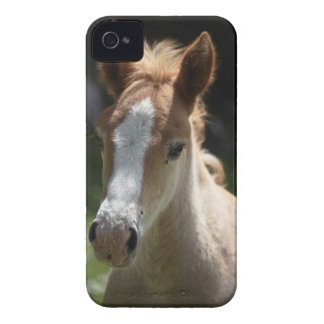 face of foal iPhone 4 cover