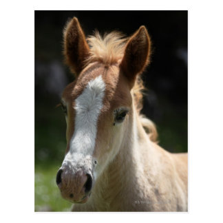 face of foal post card