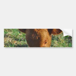Face of Little Brown Cow Bumper Sticker