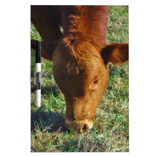 Face of Little Brown Cow Dry-Erase Board