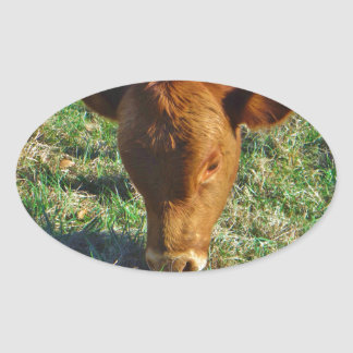 Face of Little Brown Cow Stickers