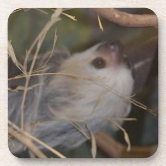 Face of Sloth Beverage Coaster