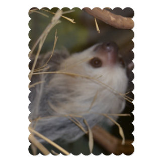 Face of Sloth Card