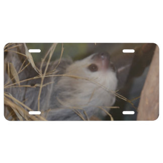 Face of Sloth License Plate
