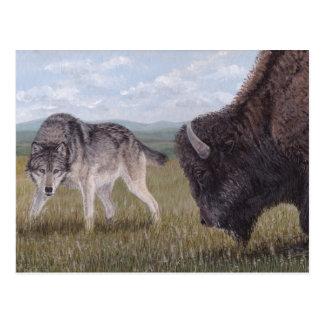 faceFace to Face Wolf & Buffalo postcard