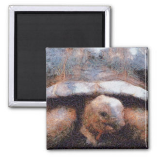Facing a tortoise 2 inch square magnet