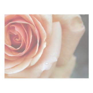 Faded and Framed Peach Rose Postcard