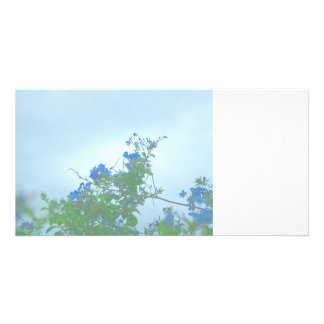 faded blue flowers green stems photo cards