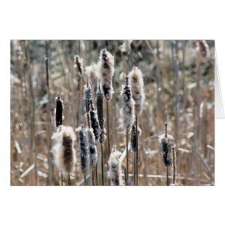 Faded Cattails Nature Photography Card