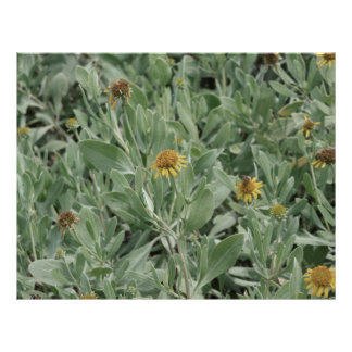 """faded florida yellow daisy flower image 8.5"""" x 11"""" flyer"""