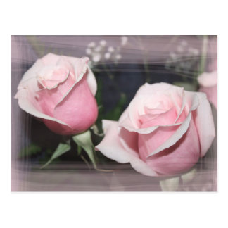 Faded pink rose image sketchy overlay postcard
