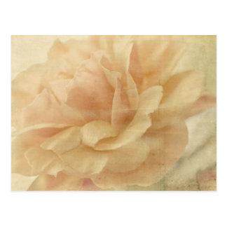 faded rose postcard