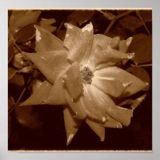 Faded Rose Print