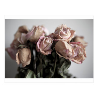 Faded Roses Postcard