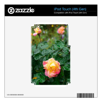 Fades wet autumn rose with blur iPod touch 4G decals