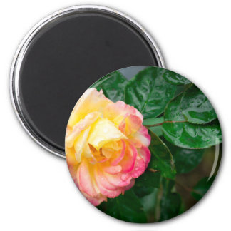 Fading autumn rose 2 inch round magnet