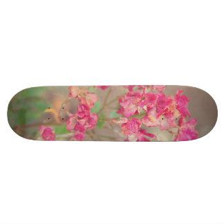 Fading beauty skateboard