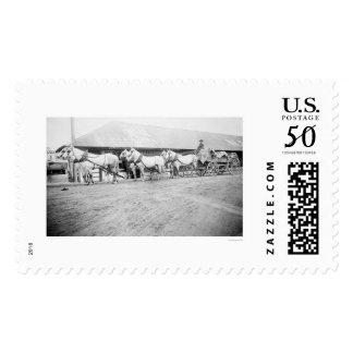 Fairbanks Horse Team 1915 Postage