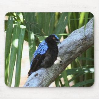 Fairy Bluebird Mousepad