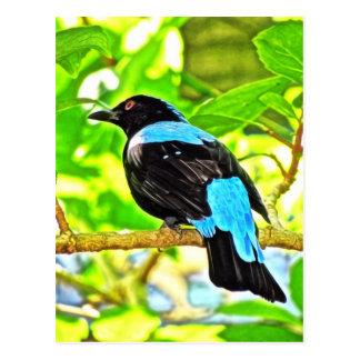 Fairy Bluebird Photo Painting Postcards