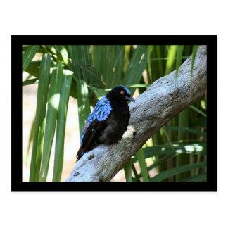 Fairy Bluebird Photo Postcard