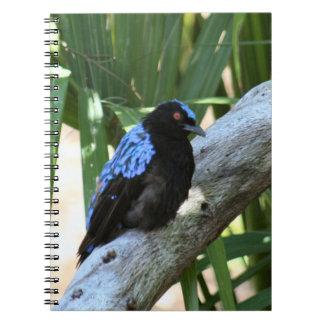 Fairy Bluebird Spiral Photo Notebook