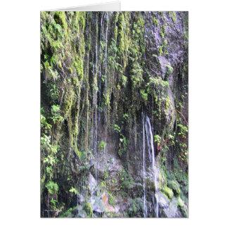 Fairy Ferns - Maui, Hawaii Greeting Cards