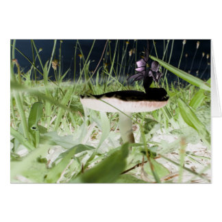 Fairy Lights by Odds Fidd Stationery Note Card