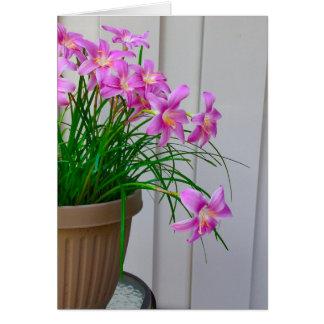 Fairy Lilies Original Still Life Card