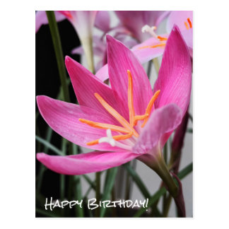 Fairy Lily Birthday Wishes Postcard