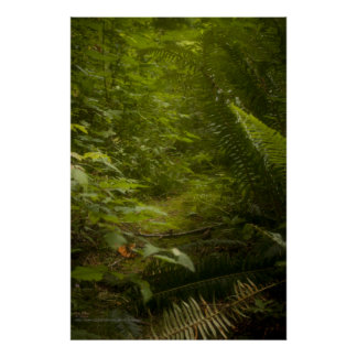 Fairy Pathways Fantasy Photograph Print