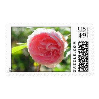 Fairy Pink Rose Postage