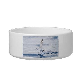 Fairy Prion Pachyptila Turtur Sea Bird Running Bowl