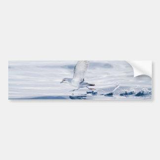 Fairy Prion Pachyptila Turtur Sea Bird Running Bumper Sticker