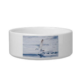 Fairy Prion Pachyptila Turtur Sea Bird Running Cat Water Bowls