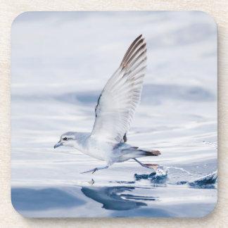 Fairy Prion Pachyptila Turtur Sea Bird Running Coaster
