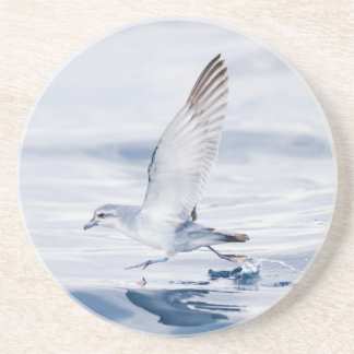 Fairy Prion Pachyptila Turtur Sea Bird Running Drink Coaster