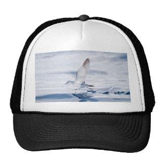 Fairy Prion Pachyptila Turtur Sea Bird Running Mesh Hats