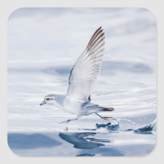 Fairy Prion Pachyptila Turtur Sea Bird Running Square Sticker